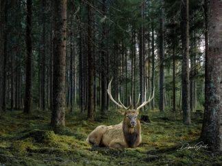elk wall art bull debra gail photography
