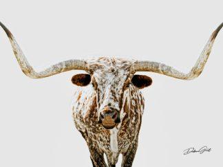 texas longhorn wall art stylized paint