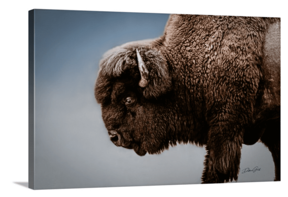Spiritual Buffalo Print Wall Art wholesale ranch collections rustic bison Canvas