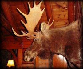 Garmisch moose