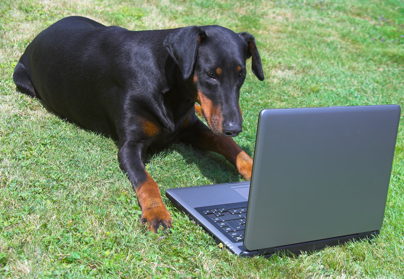 independent publishing, doberman looking at a laptop