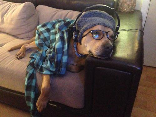 having fun, dog dressed in shirt and headphones no motivation to write