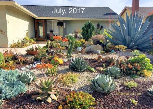 ten succulent front yard essentials