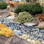 Succulent Landscape Design Ideas How To S Videos Debra Lee Baldwin Succulent Expert