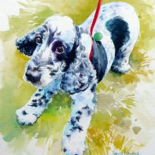 Spaniel Puppy watercolour by Debra Wenlock