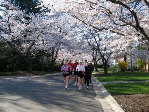 CherryBlossomRunning
