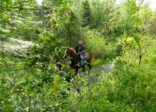 HorseGallopingOnTrail