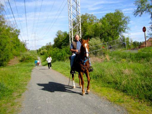 HorseWalkingOnTrail