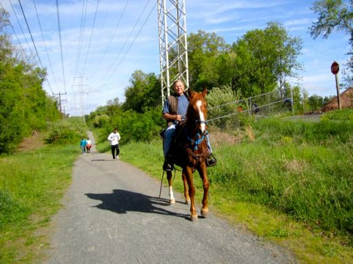 HorseWalkingOnTrail