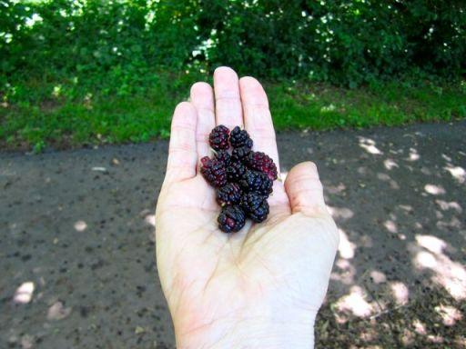 MulberriesHand