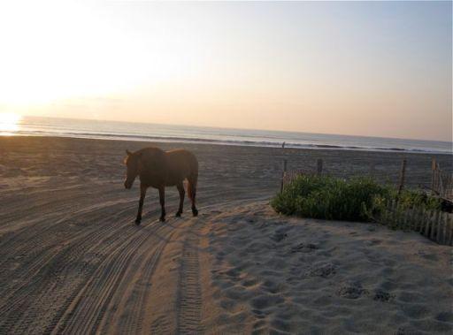 HorseOnBeachRoad