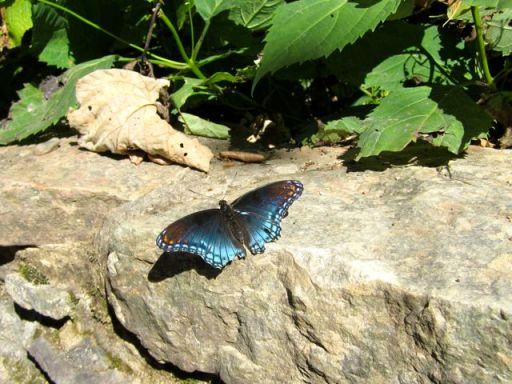 CascadesFallsButterfly