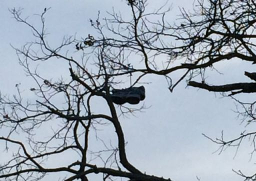 ShoesInTree
