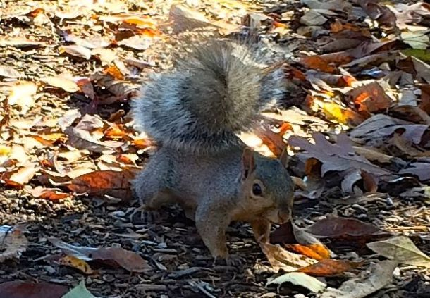 SquirellLeaves