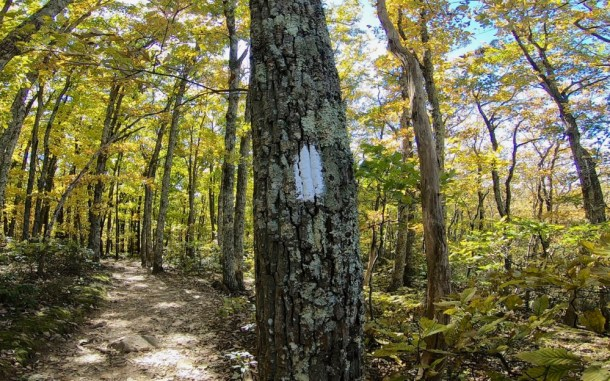 White Blaze of the Appalachian Trail