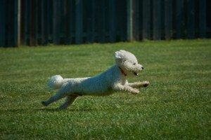 Daily Rates Dog Running at The Dogwoods Mt Horeb WI