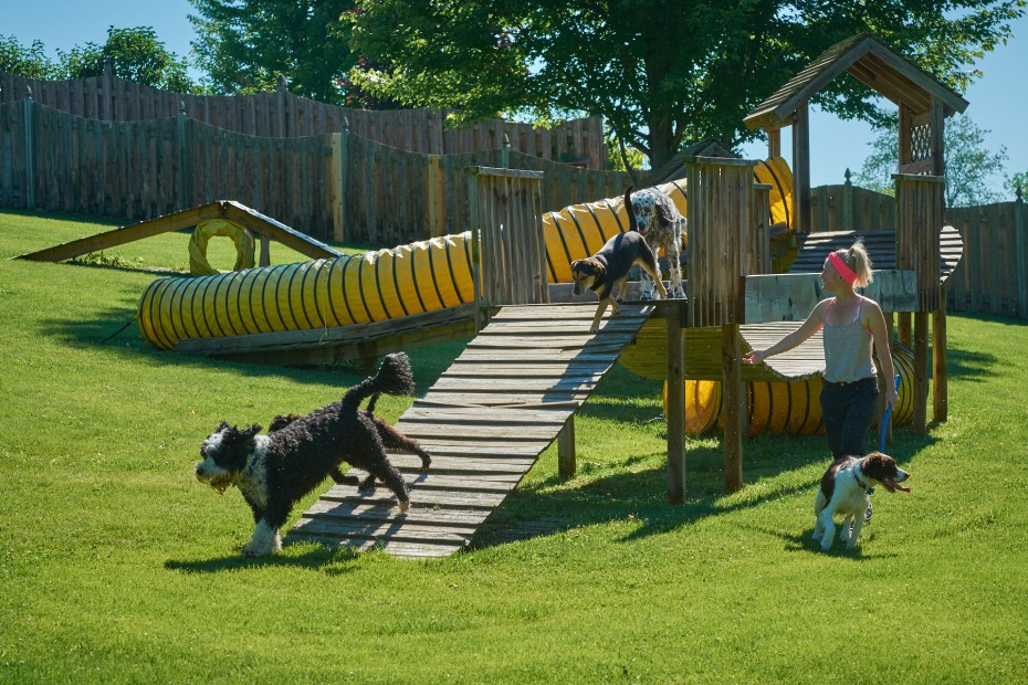Dogs On Agility Equipment The Dogwoods Mount Horeb WI