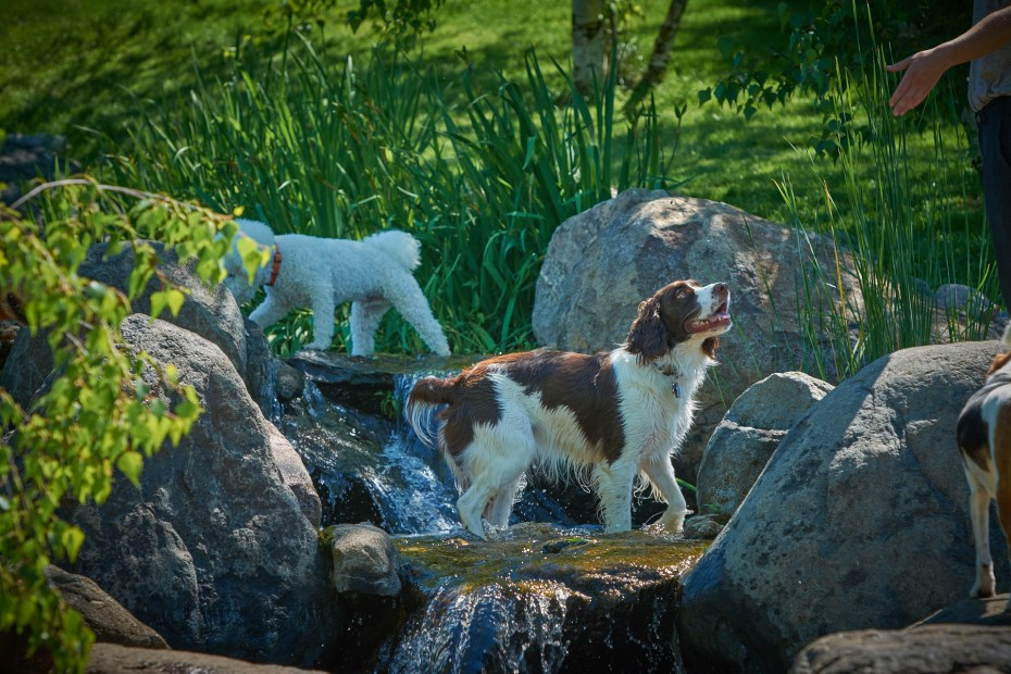 Dog In The Stream at The Dogwoods Mt Horeb WI