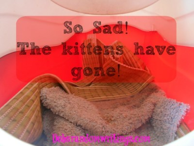 The Feral Kittens Have Gone…