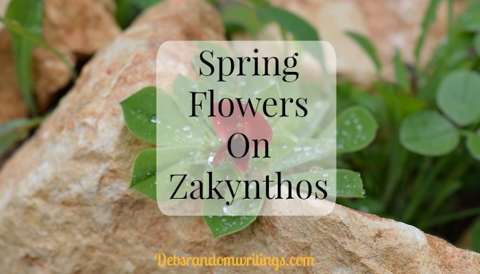 Spring flowers on Zakynthos