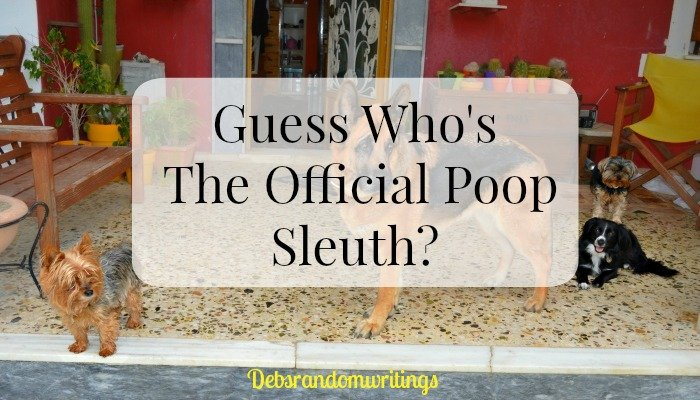 Official Poop Sleuth