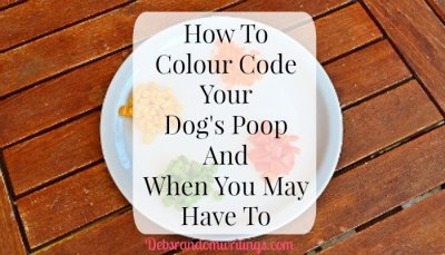 How To Colour Code Your Dog's Poop And When You May Have To