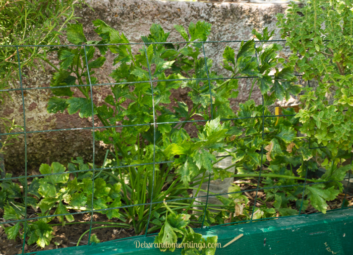 Read on to find out how to freeze fresh herbs to keep the kitchen supplied all winter long.