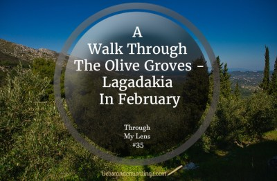 A walk through the olive groves in February, Zakynthos