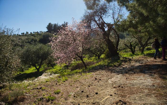 Lagadakia in February is a beautiful place to wander.