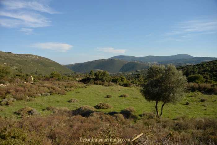 An olive tree in the forefront with green hills and a blue sky in the background.