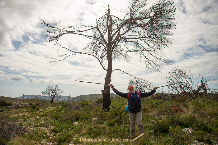 A lady waving her hiking sticks under a burned tree on Zakynthos