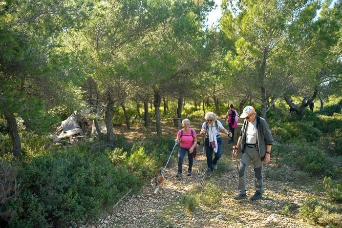 Hikers walking through a wooded area. Green trees.
