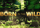 """A Scientific Skeptic Watches """"Born in the Wild"""" (Tennessee Episode)"""