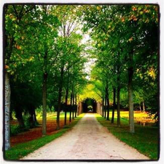 Avenue of autumn colours