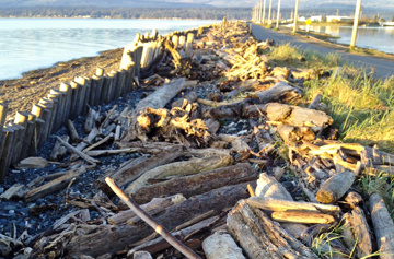 Illegal to take driftwood from Goose Spit Park