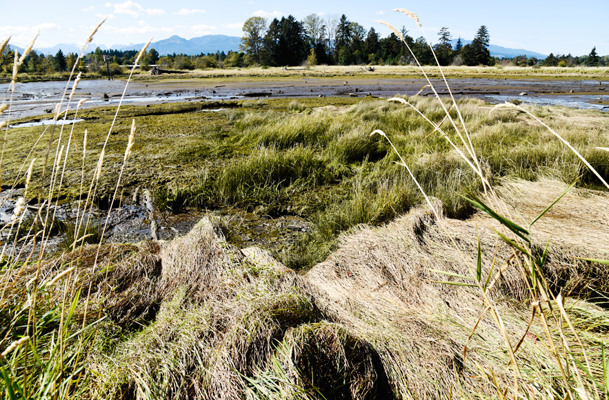 Hollyhock Flats in the Courtenay Estuary — the essay