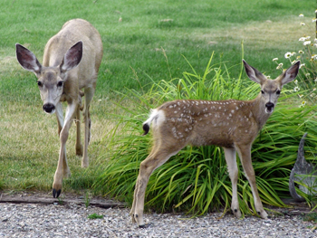 Managing urban deer is a local problem, not a provincial one