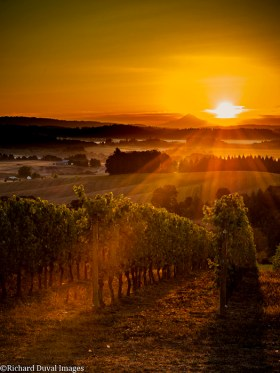 Tidalstar Vineyard in the Willamette Valley Richard Duval