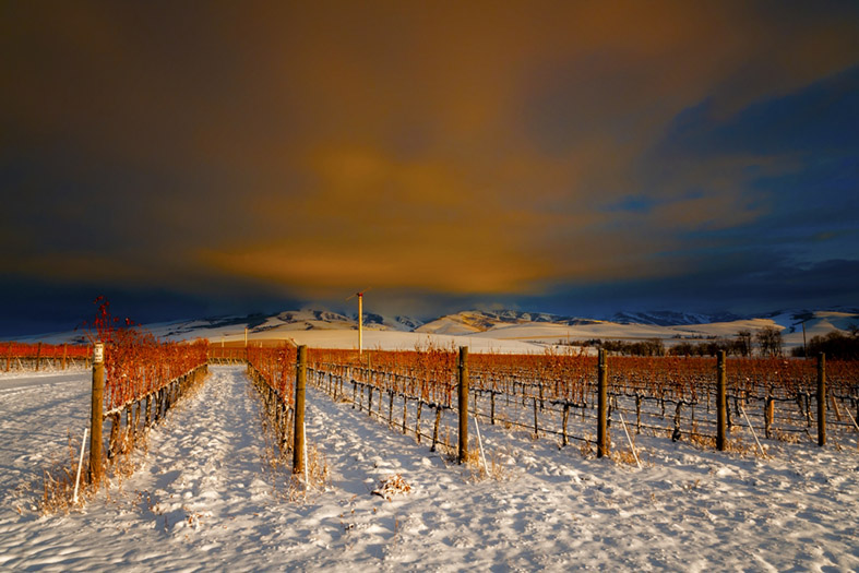 Winter vineyard in Walla Walla, Washington, Richard Duval