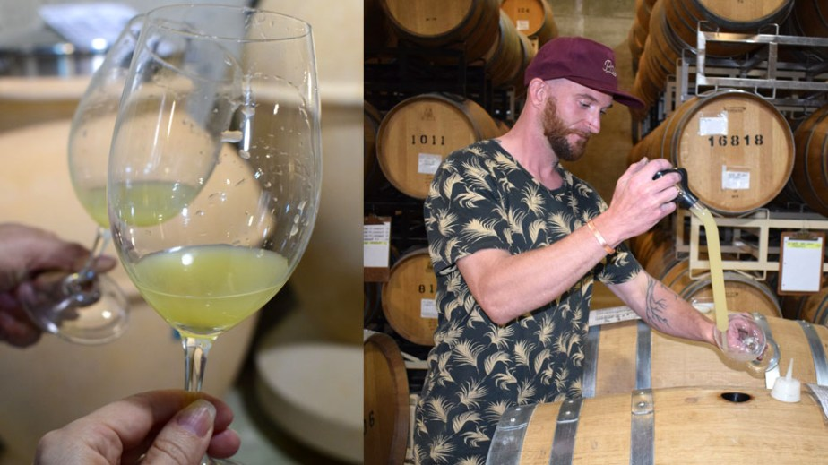 3rd generation winemaker Tyler Williams, Kiona Vineyards