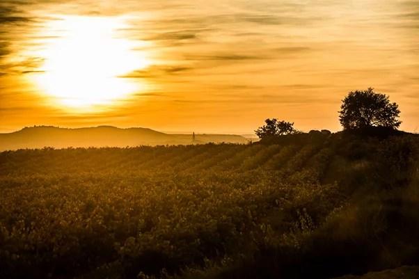 amanecer en los viñedos de La Rioja