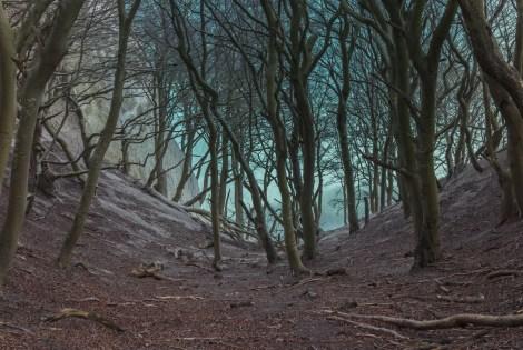 Møns_Klint_beech_trees_in_gorge_2015-04-01-4864.jpg