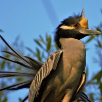 PODCAST: San Antonio's 'War on Birds' Keeps Expanding