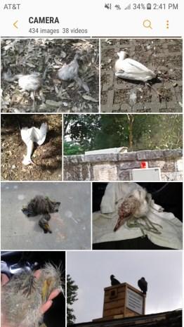injured bird montage