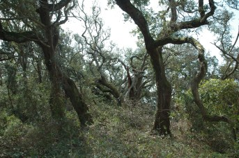 Live oak forest
