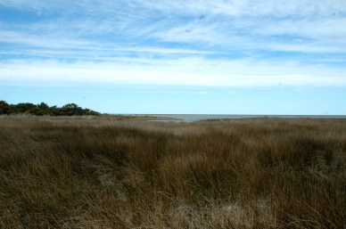 View of the salt marsh on the Pamlico Sound side