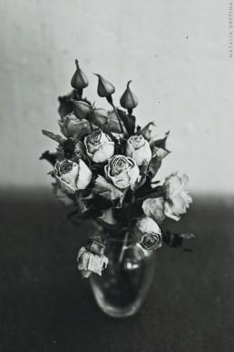 darkflowersinvase