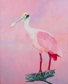"Thomas Frontini, Spoonbill 2, 2015, Oil on Canvas, 45"" x 36"", $5,000"