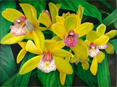 Lemon Orchids