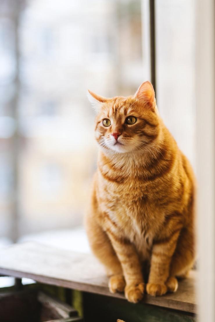 Cara Merawat Kucing Persia Agar Tumbuh Sehat Dan Lincah